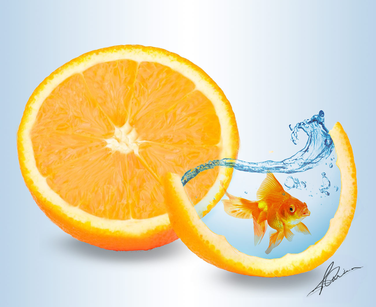 diseno-gold-fish-and-orange
